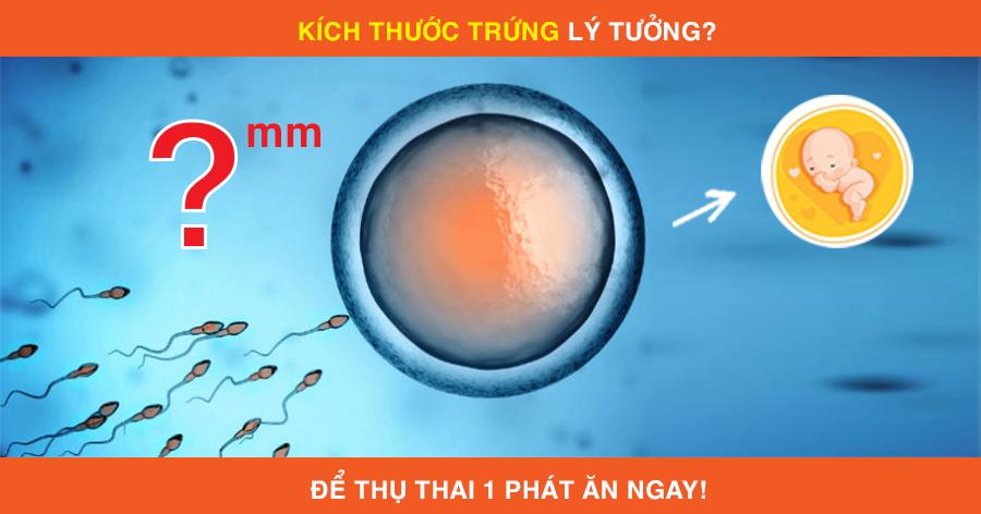Kích thước trứng lí tưởng để thụ thai một phát ăn ngay 1